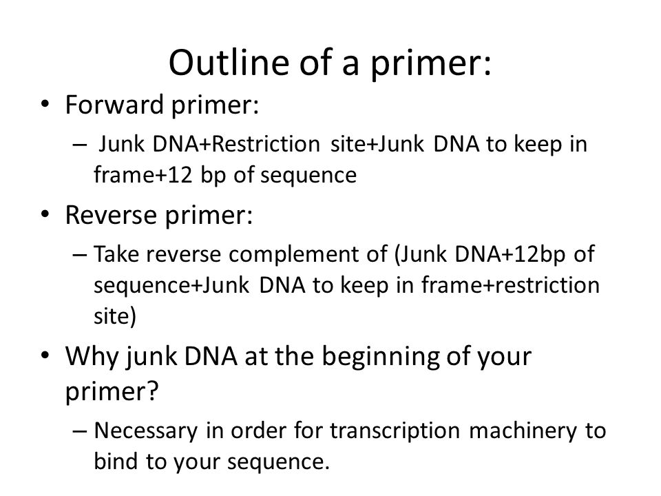 Outline of a primer: Forward primer: – Junk DNA+Restriction site+Junk DNA to keep in frame+12 bp of sequence Reverse primer: – Take reverse complement of (Junk DNA+12bp of sequence+Junk DNA to keep in frame+restriction site) Why junk DNA at the beginning of your primer.
