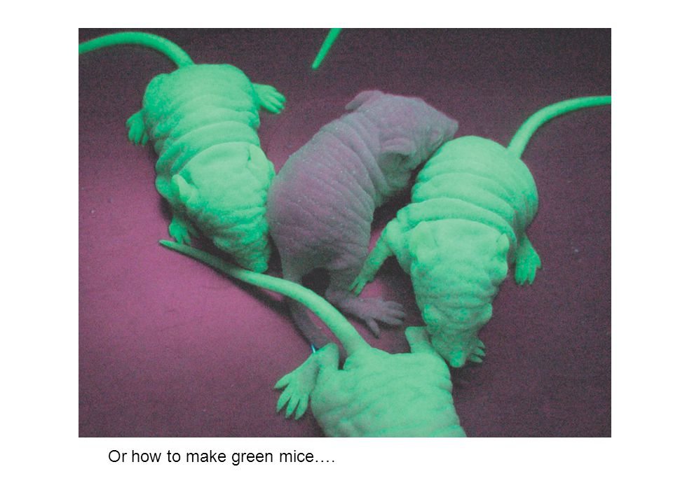 Or how to make green mice….