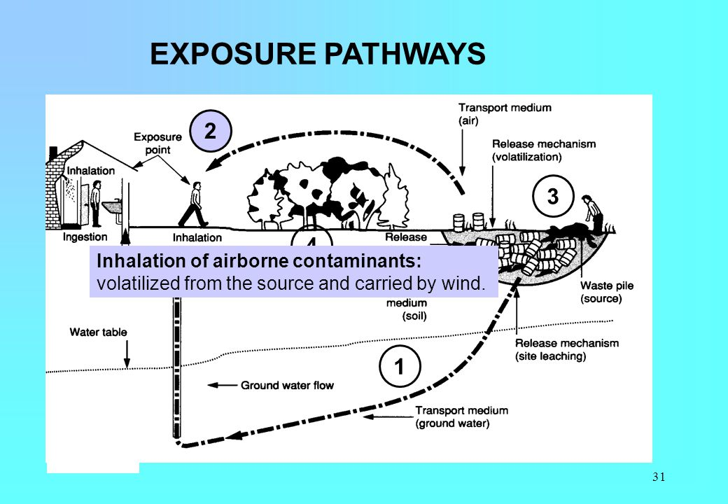 31 EXPOSURE PATHWAYS 1 2 3 4 Inhalation of airborne contaminants: volatilized from the source and carried by wind.