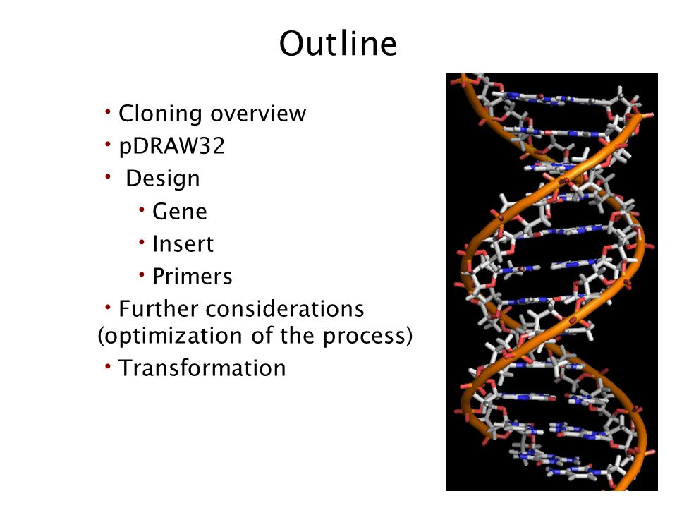 Outline Cloning overview pDRAW32 Design Gene Insert Primers Further considerations (optimization of the process) Transformation