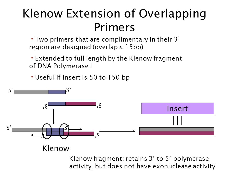 Klenow Extension of Overlapping Primers Two primers that are complimentary in their 3 region are designed (overlap 15bp) Extended to full length by th