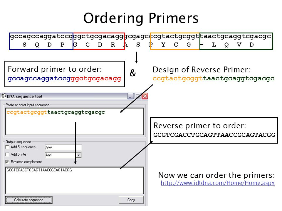 gccagccaggatccgggctgcgacagggcgagcccgtactgcggttaactgcaggtcgacgc S Q D P G C D R A S P Y C G - L Q V D Ordering Primers Forward primer to order: gccagcc