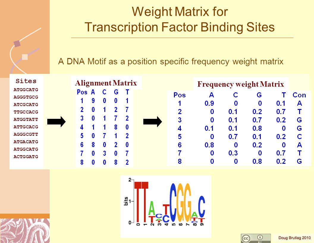 Weight Matrix for Transcription Factor Binding Sites A DNA Motif as a position specific frequency weight matrix Sites ATGGCATG AGGGTGCG ATCGCATG TTGCCACG ATGGTATT ATTGCACG AGGGCGTT ATGACATG ATGGCATG ACTGGATG Alignment Matrix Frequency weight Matrix