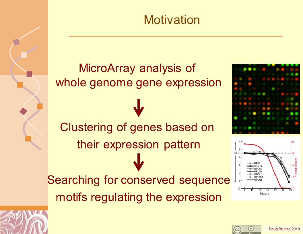 Motivation Searching for conserved sequence motifs regulating the expression MicroArray analysis of whole genome gene expression Clustering of genes based on their expression pattern