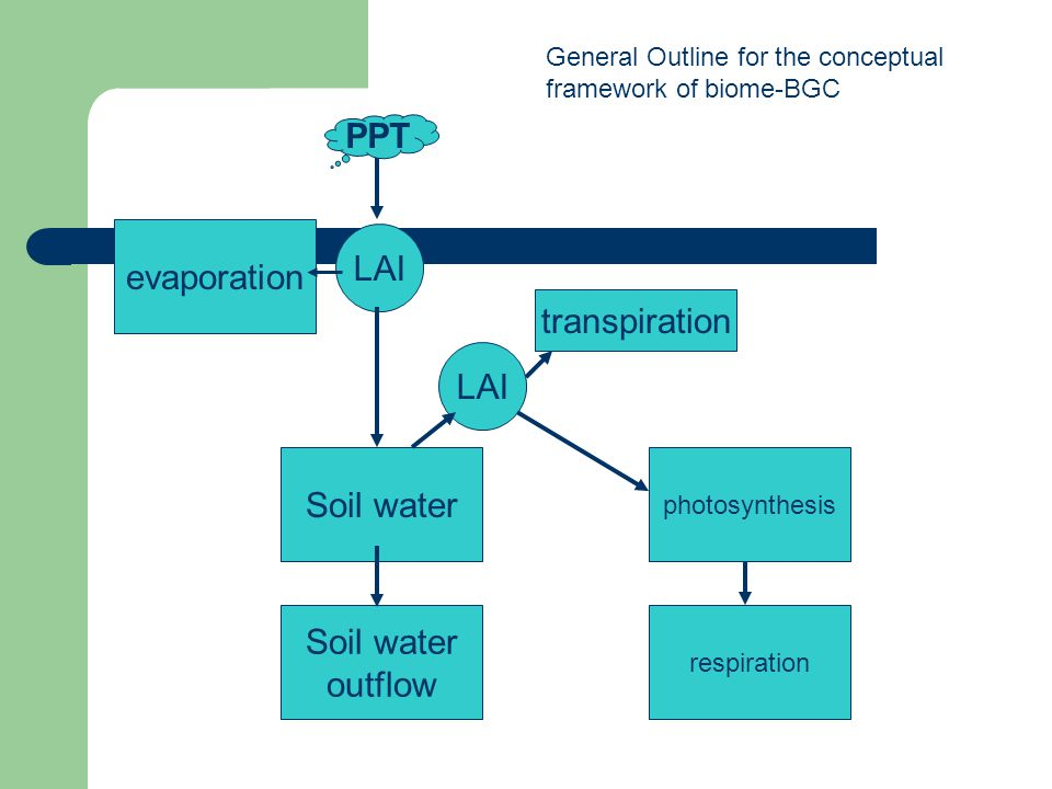 PPT LAI evaporation Soil water outflow transpiration photosynthesis respiration LAI General Outline for the conceptual framework of biome-BGC