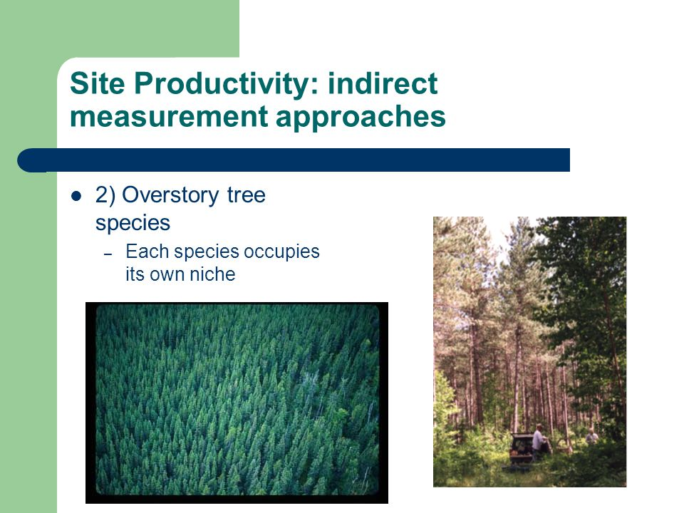 Site Productivity: indirect measurement approaches 2) Overstory tree species – Each species occupies its own niche