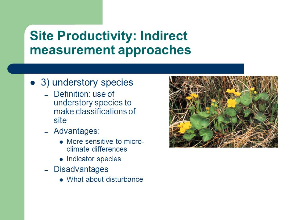 Site Productivity: Indirect measurement approaches 3) understory species – Definition: use of understory species to make classifications of site – Adv