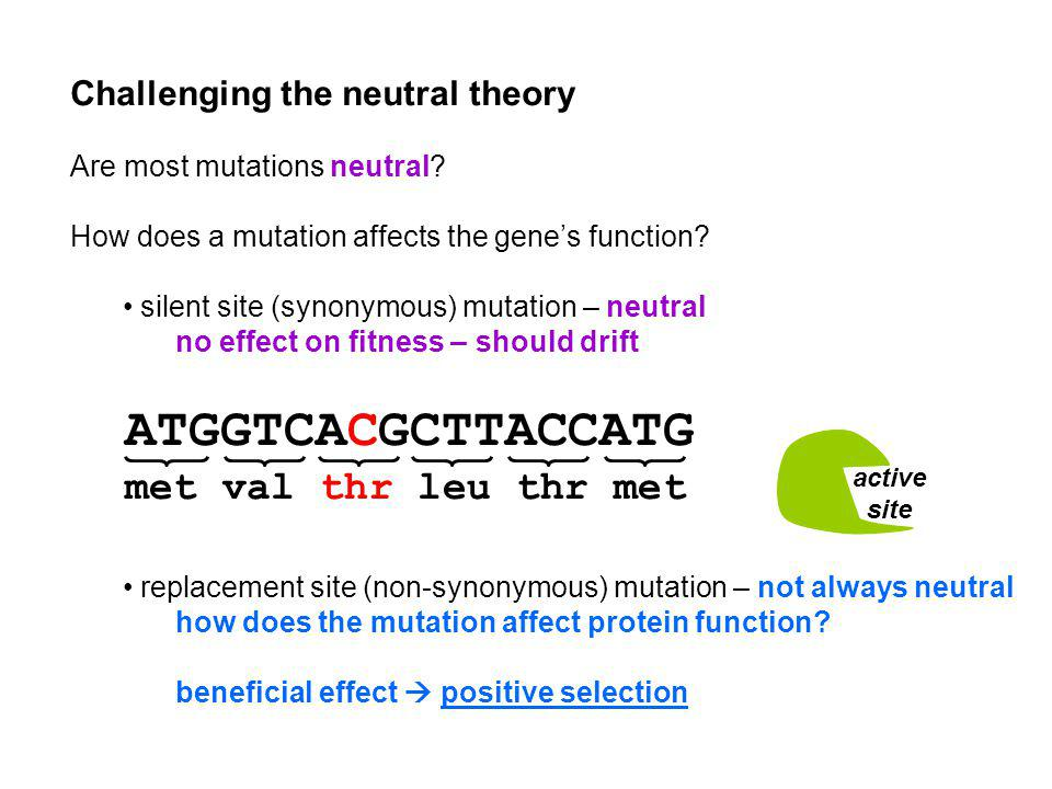 Challenging the neutral theory Are most mutations neutral? How does a mutation affects the genes function? silent site (synonymous) mutation – neutral