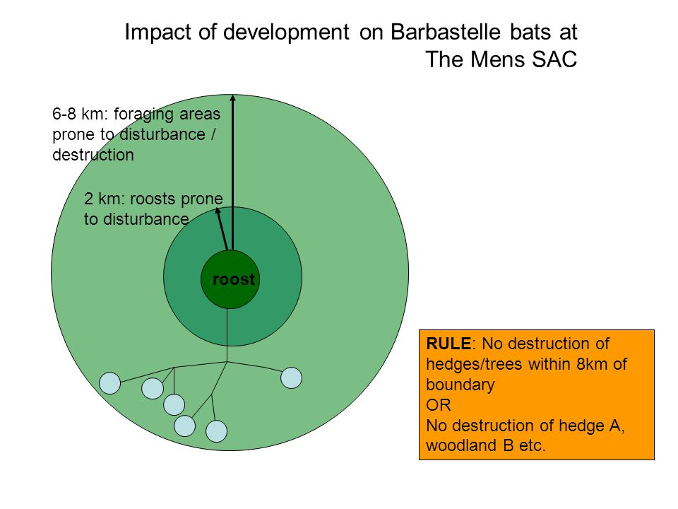 Impact of development on Barbastelle bats at The Mens SAC 2 km: roosts prone to disturbance 6-8 km: foraging areas prone to disturbance / destruction roost RULE: No destruction of hedges/trees within 8km of boundary OR No destruction of hedge A, woodland B etc.