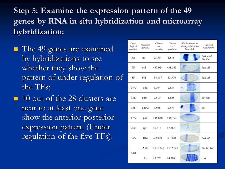 Step 5: Examine the expression pattern of the 49 genes by RNA in situ hybridization and microarray hybridization: The 49 genes are examined by hybridi