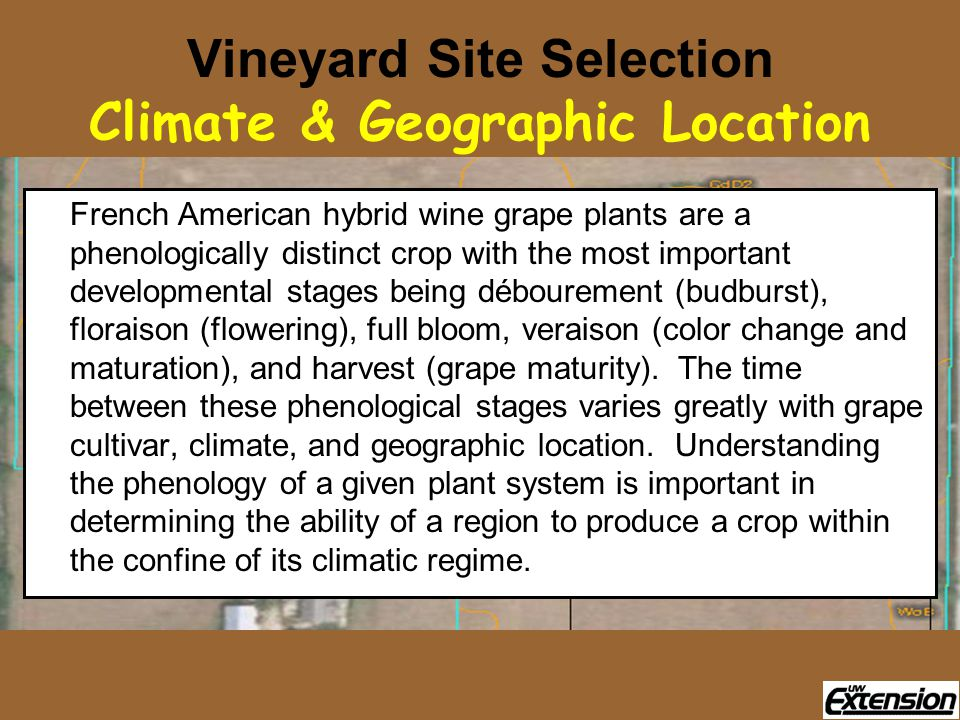 Vineyard Site Selection Climate & Geographic Location French American hybrid wine grape plants are a phenologically distinct crop with the most import