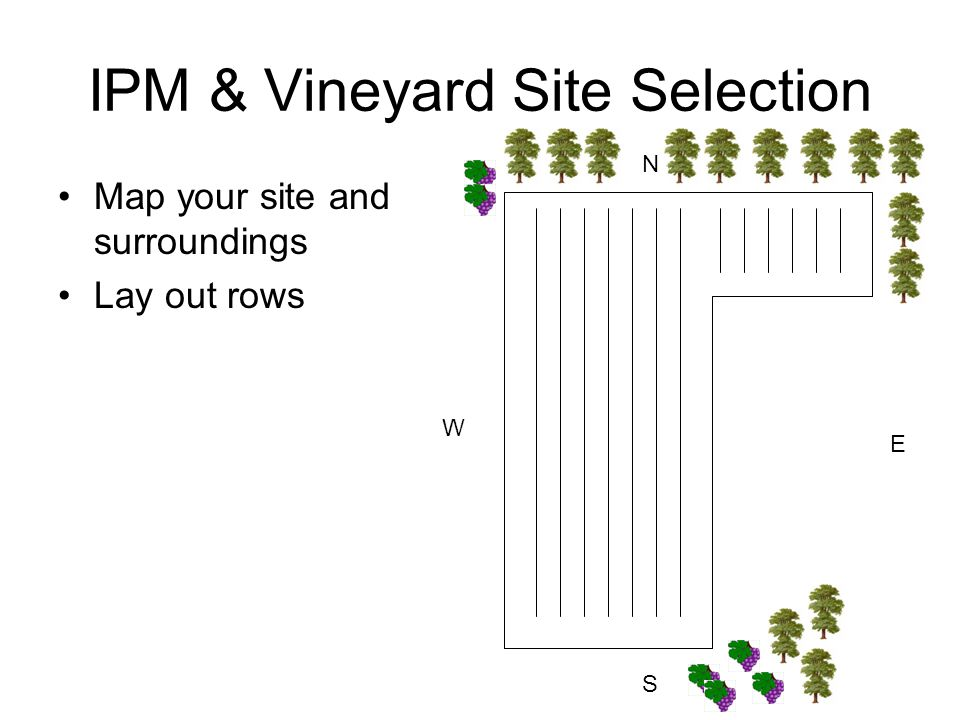 IPM & Vineyard Site Selection Map your site and surroundings Lay out rows N S E W