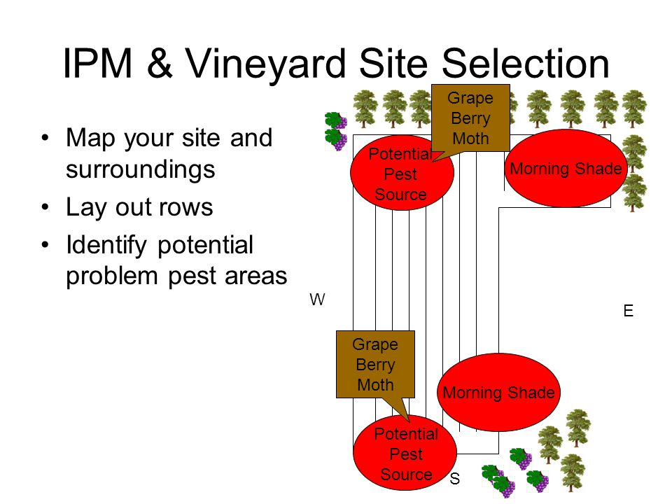 IPM & Vineyard Site Selection Map your site and surroundings Lay out rows Identify potential problem pest areas N S E W Potential Pest Source Morning