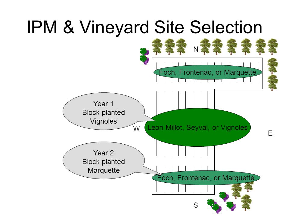 IPM & Vineyard Site Selection N S E W Foch, Frontenac, or Marquette Leon Millot, Seyval, or Vignoles Foch, Frontenac, or Marquette Year 1 Block planted Vignoles Year 2 Block planted Marquette