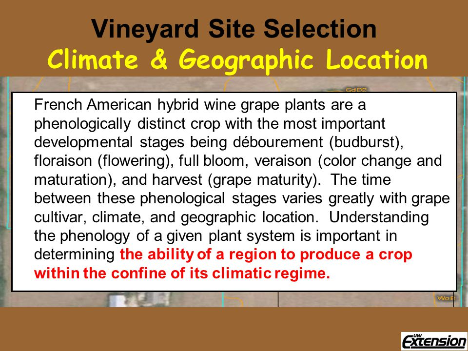 Vineyard Site Selection Climate & Geographic Location French American hybrid wine grape plants are a phenologically distinct crop with the most important developmental stages being débourement (budburst), floraison (flowering), full bloom, veraison (color change and maturation), and harvest (grape maturity).