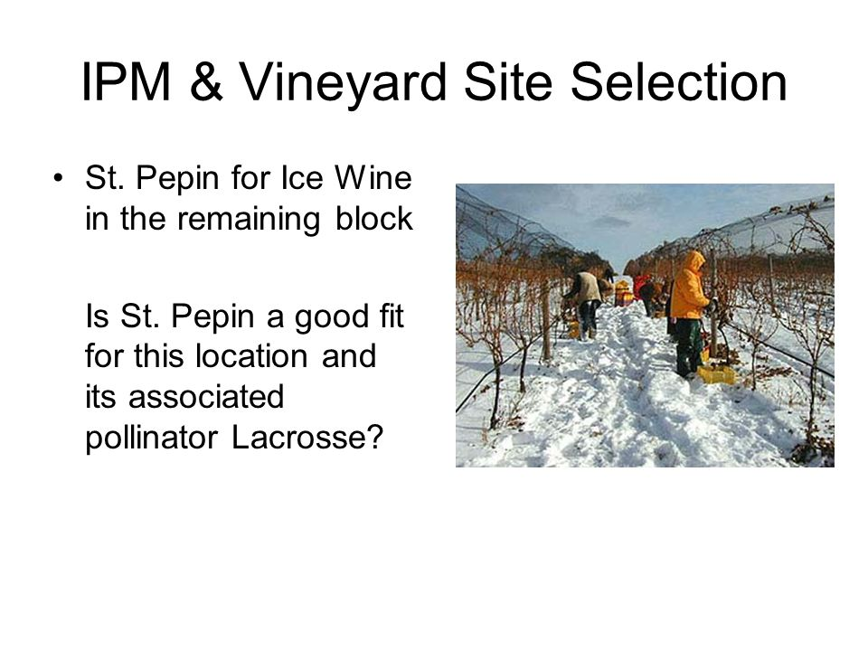 IPM & Vineyard Site Selection St. Pepin for Ice Wine in the remaining block Is St. Pepin a good fit for this location and its associated pollinator La