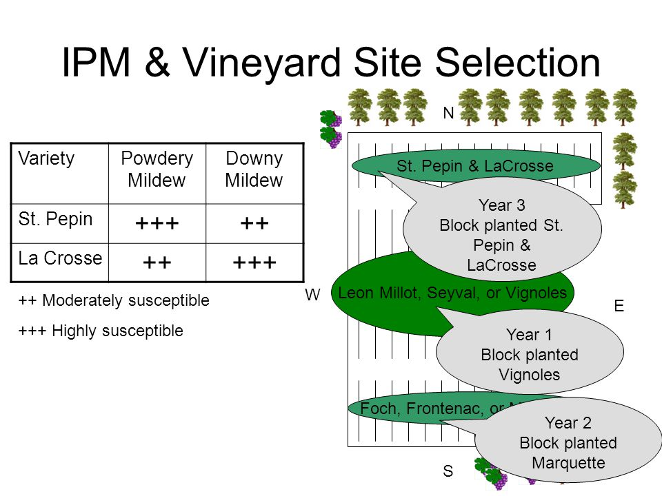 IPM & Vineyard Site Selection N S E W St. Pepin & LaCrosse Leon Millot, Seyval, or Vignoles Foch, Frontenac, or Marquette Year 1 Block planted Vignole
