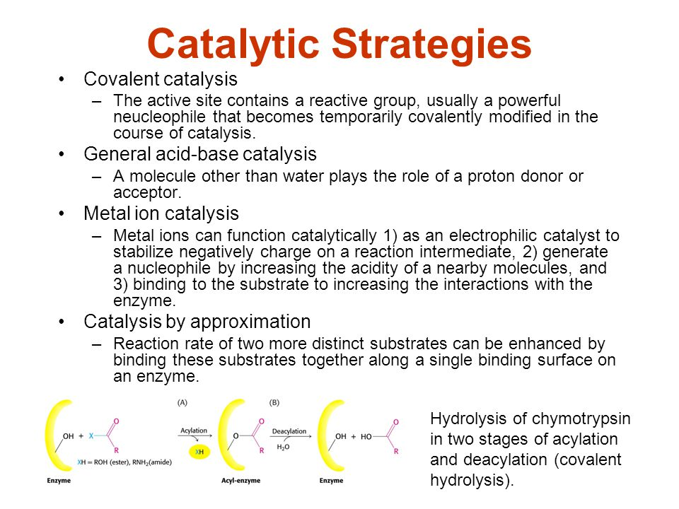 Catalytic Strategies Covalent catalysis –The active site contains a reactive group, usually a powerful neucleophile that becomes temporarily covalentl