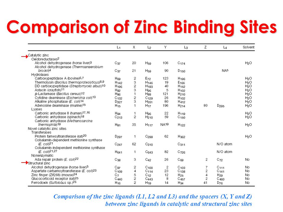 Comparison of Zinc Binding Sites Comparison of the zinc ligands (L1, L2 and L3) and the spacers (X, Y and Z) between zinc ligands in catalytic and str