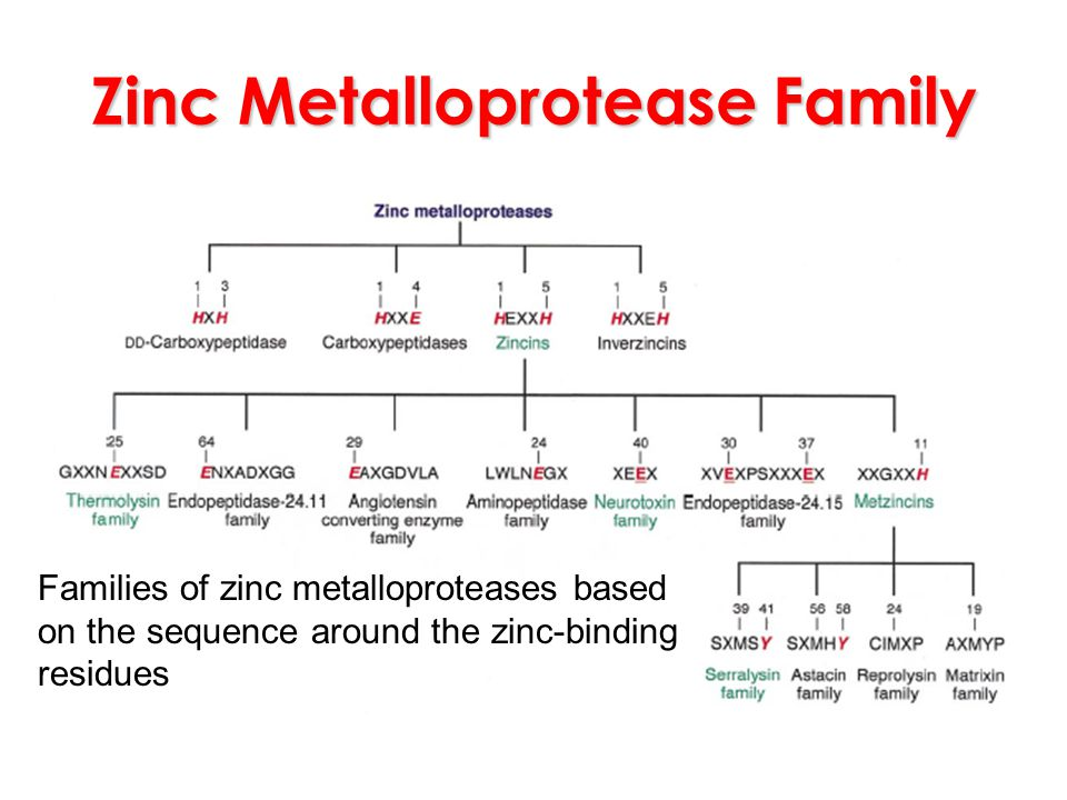 Zinc Metalloprotease Family Families of zinc metalloproteases based on the sequence around the zinc-binding residues