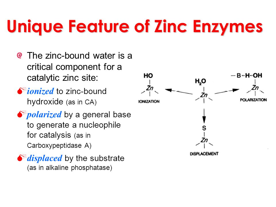 Unique Feature of Zinc Enzymes The zinc-bound water is a critical component for a catalytic zinc site: ionized to zinc-bound hydroxide (as in CA) pola