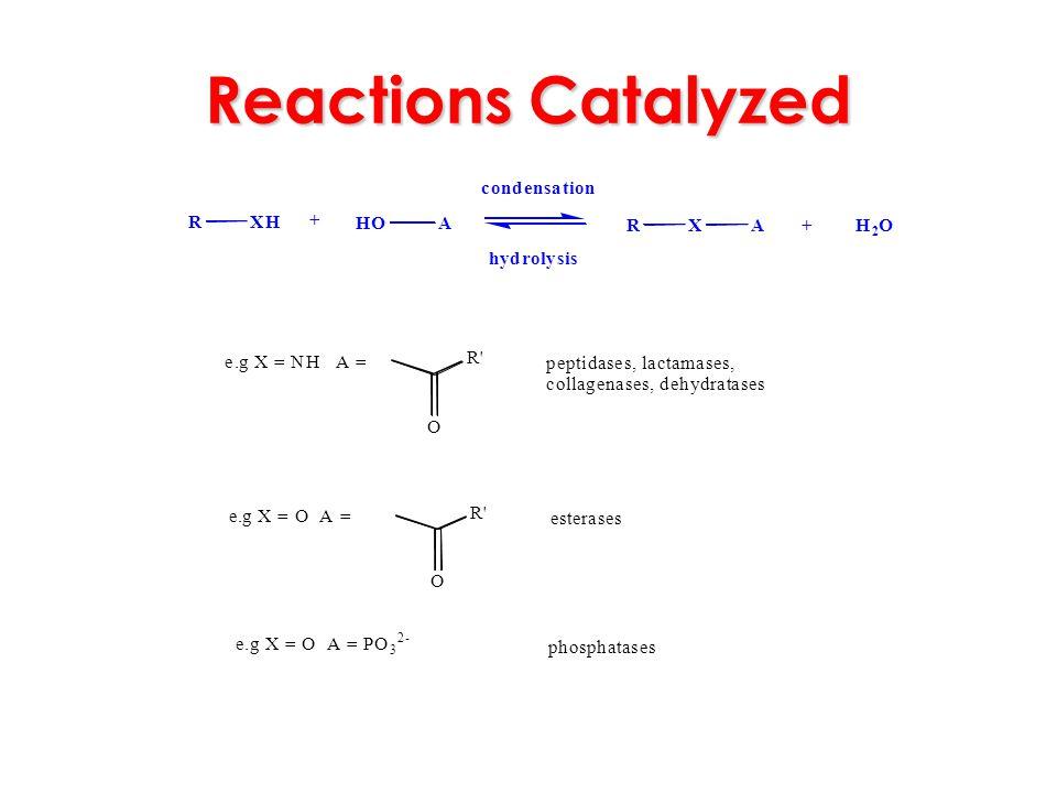 Reactions Catalyzed RXH HOA RXA + H 2 O + condensation hydrolysis e.g X = NH A = O R' peptidases, lactamases, collagenases, dehydratases e.g X = O A =