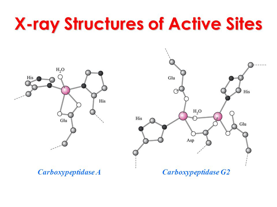 X-ray Structures of Active Sites Carboxypeptidase ACarboxypeptidase G2