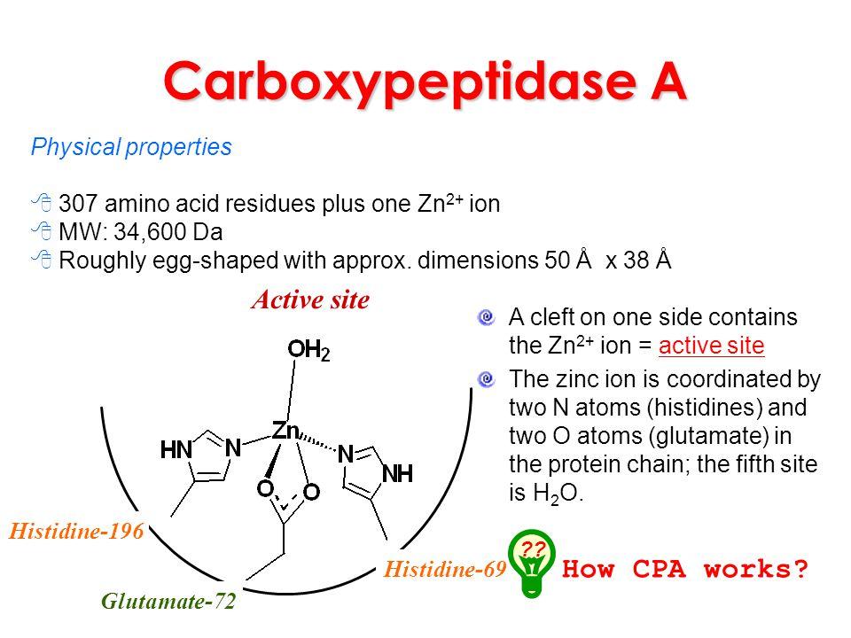 Carboxypeptidase A Active site Histidine-196 Histidine-69 Glutamate-72 Physical properties 307 amino acid residues plus one Zn 2+ ion MW: 34,600 Da Ro