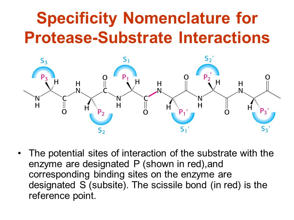 Major Classes of Proteases Serine proteases Cysteine protease Aspartyl Proteases Metalloproteases