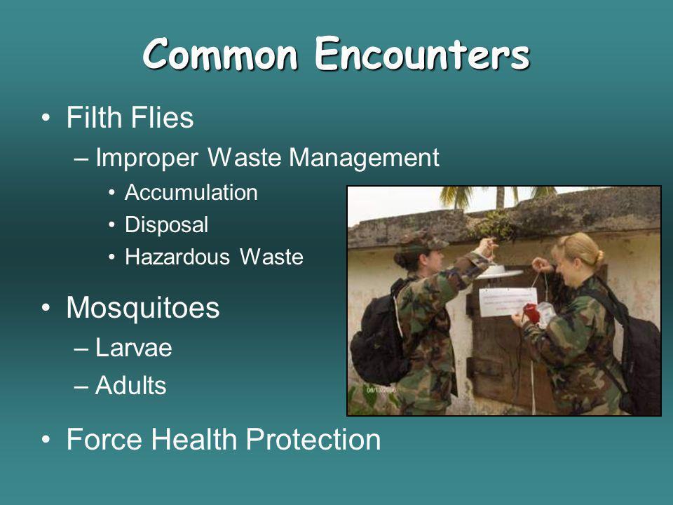 Common Encounters Filth Flies –Improper Waste Management Accumulation Disposal Hazardous Waste Mosquitoes –Larvae –Adults Force Health Protection