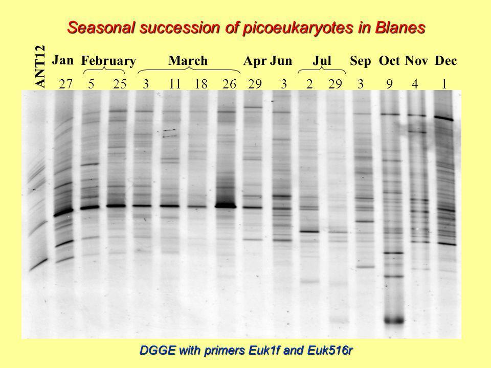 ANT12 Jan February March Apr Jun Jul Sep Oct Nov Dec 5253111826272932 3941 Seasonal succession of picoeukaryotes in Blanes DGGE with primers Euk1f and