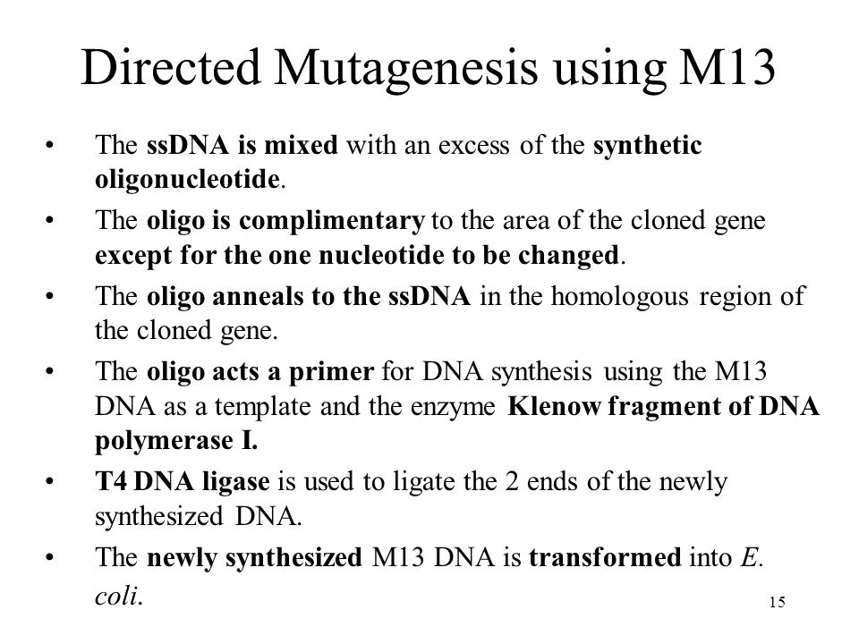 15 Directed Mutagenesis using M13 The ssDNA is mixed with an excess of the synthetic oligonucleotide.
