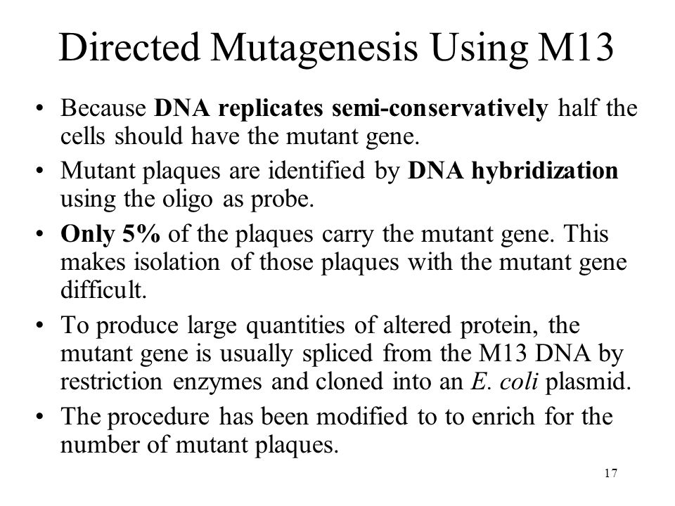 17 Directed Mutagenesis Using M13 Because DNA replicates semi-conservatively half the cells should have the mutant gene.