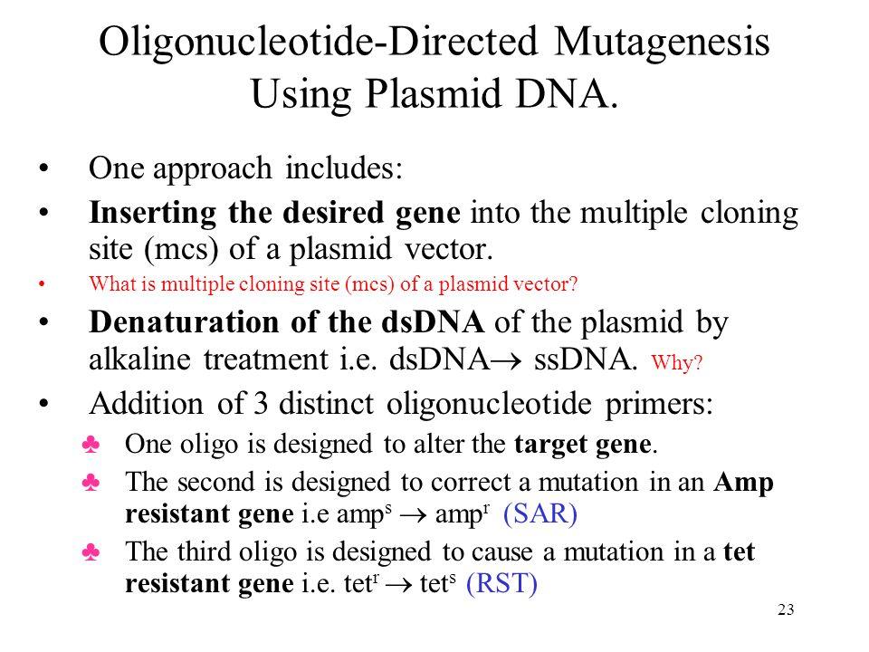 23 Oligonucleotide-Directed Mutagenesis Using Plasmid DNA.