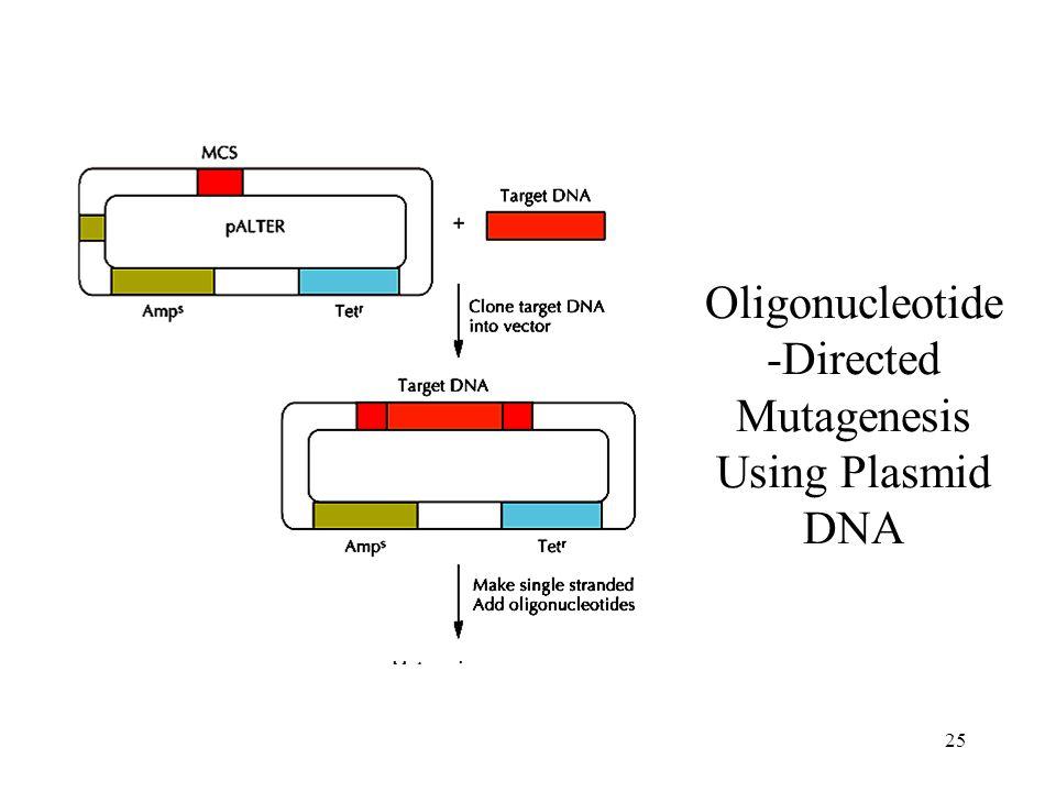 25 Oligonucleotide -Directed Mutagenesis Using Plasmid DNA