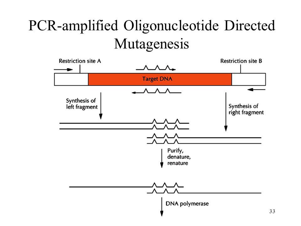 33 PCR-amplified Oligonucleotide Directed Mutagenesis
