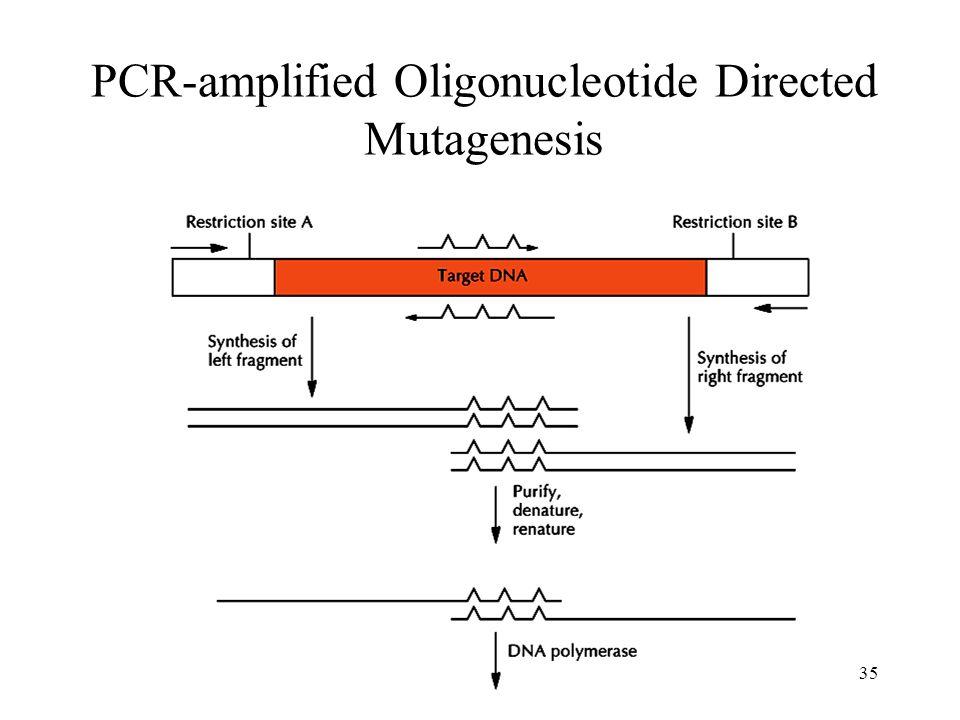 35 PCR-amplified Oligonucleotide Directed Mutagenesis