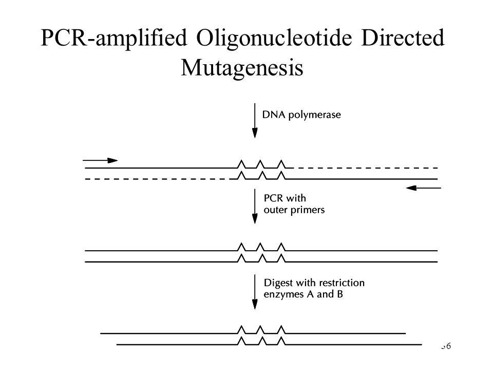 36 PCR-amplified Oligonucleotide Directed Mutagenesis