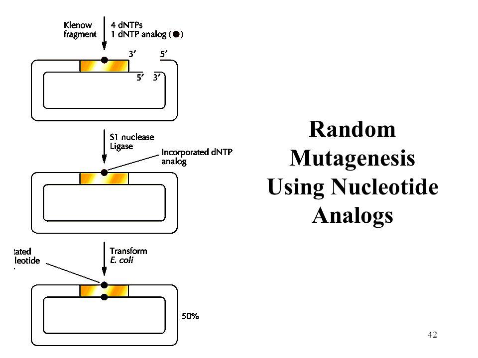 42 Random Mutagenesis Using Nucleotide Analogs