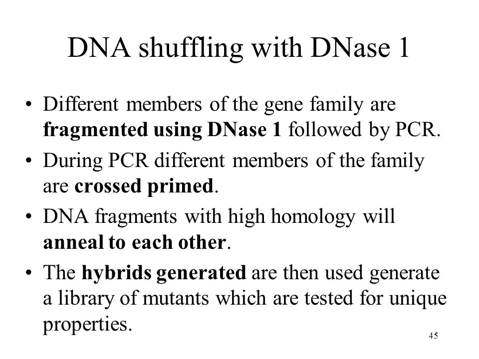 45 DNA shuffling with DNase 1 Different members of the gene family are fragmented using DNase 1 followed by PCR.