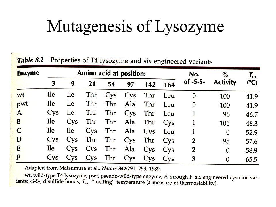 53 Mutagenesis of Lysozyme