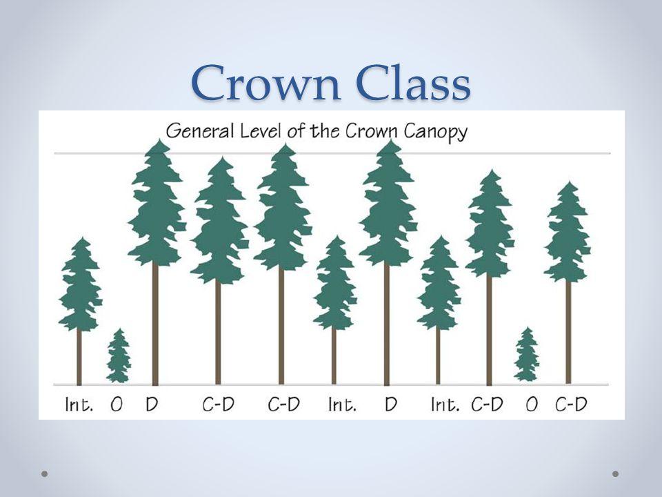 Crown Class