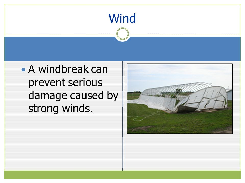 A windbreak can prevent serious damage caused by strong winds. Wind