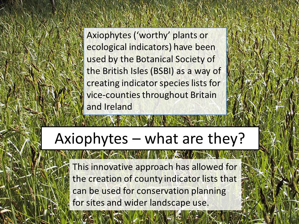 Axiophytes – what are they.