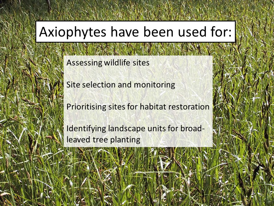 Axiophytes have been used for: Assessing wildlife sites Site selection and monitoring Prioritising sites for habitat restoration Identifying landscape