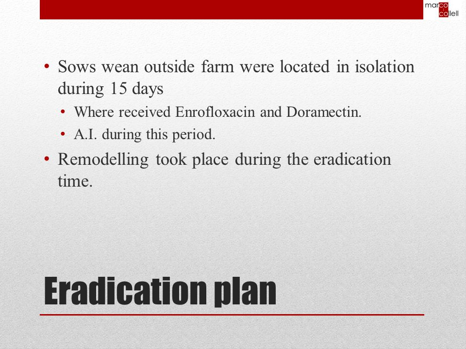 Sows wean outside farm were located in isolation during 15 days Where received Enrofloxacin and Doramectin.