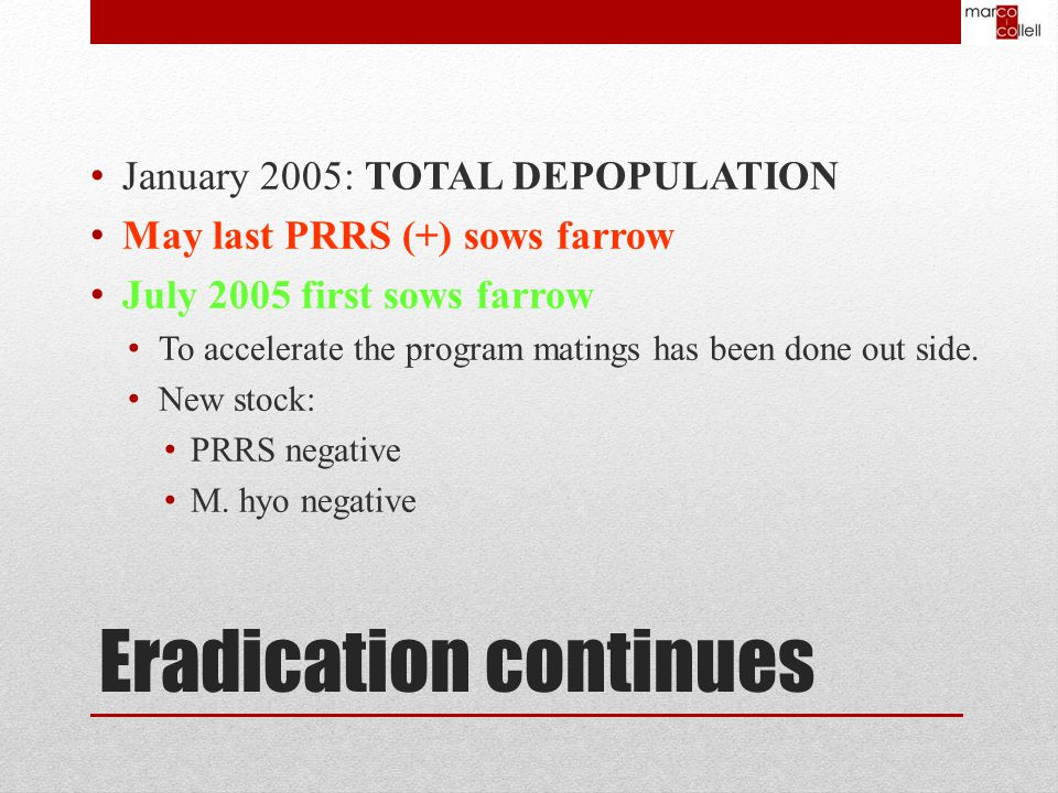 Eradication continues January 2005: TOTAL DEPOPULATION May last PRRS (+) sows farrow July 2005 first sows farrow To accelerate the program matings has been done out side.