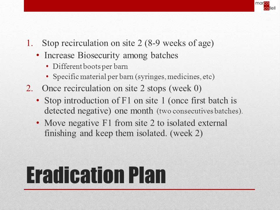 Eradication Plan 1.Stop recirculation on site 2 (8-9 weeks of age) Increase Biosecurity among batches Different boots per barn Specific material per barn (syringes, medicines, etc) 2.Once recirculation on site 2 stops (week 0) Stop introduction of F1 on site 1 (once first batch is detected negative) one month (two consecutives batches).