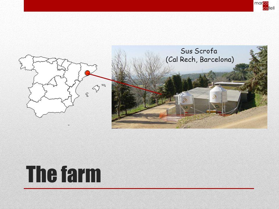 Sus Scrofa (Cal Rech, Barcelona) The farm