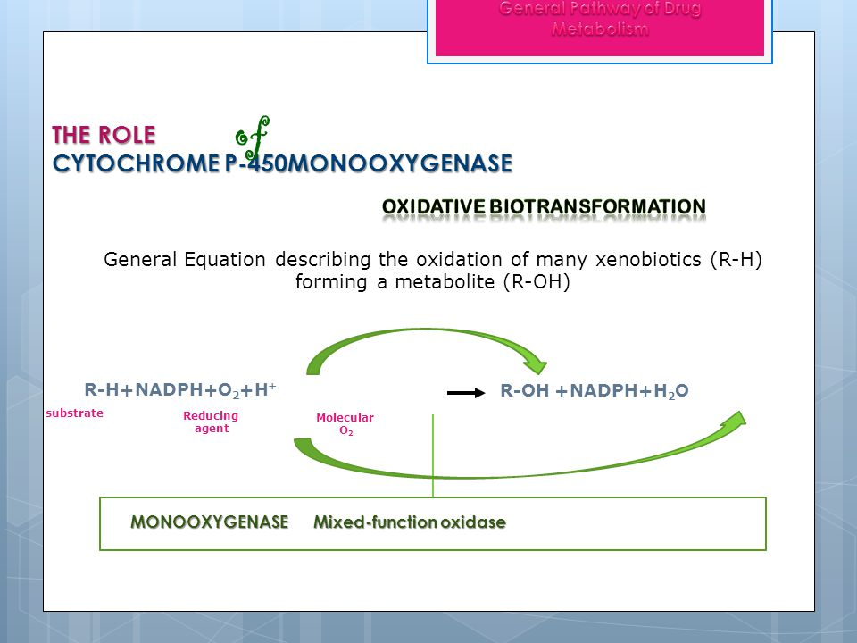 Oxidation of Aromatic moieties AROMATIC HYDROXYLATION occur at the PARA position Phenolic metabolites undergo further conversion to become polar and water-soluble Glucuronide or Sulfate conjugates
